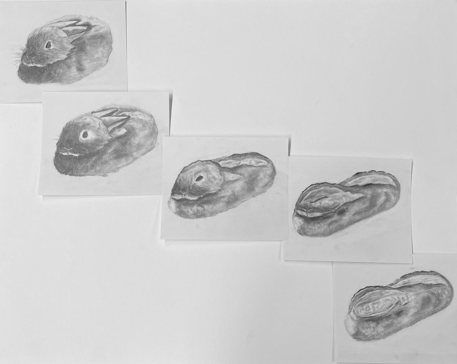 """Foundations Studio - Metamorphosis Project:  Students were asked to find an animal online and then take a photo of an object in a corresponding position. After rendering each picture individually, they had to create three """"middle images"""" that morphed the drawings into each other."""